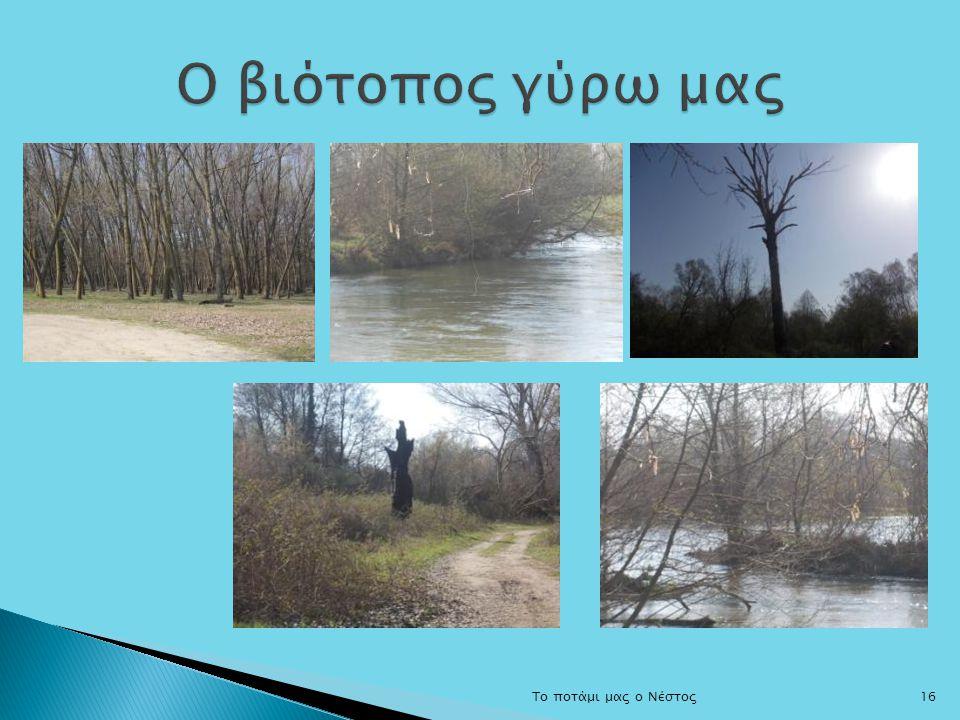 Ο βιότοπος γύρω μας Το ποτάμι μας ο Νέστος