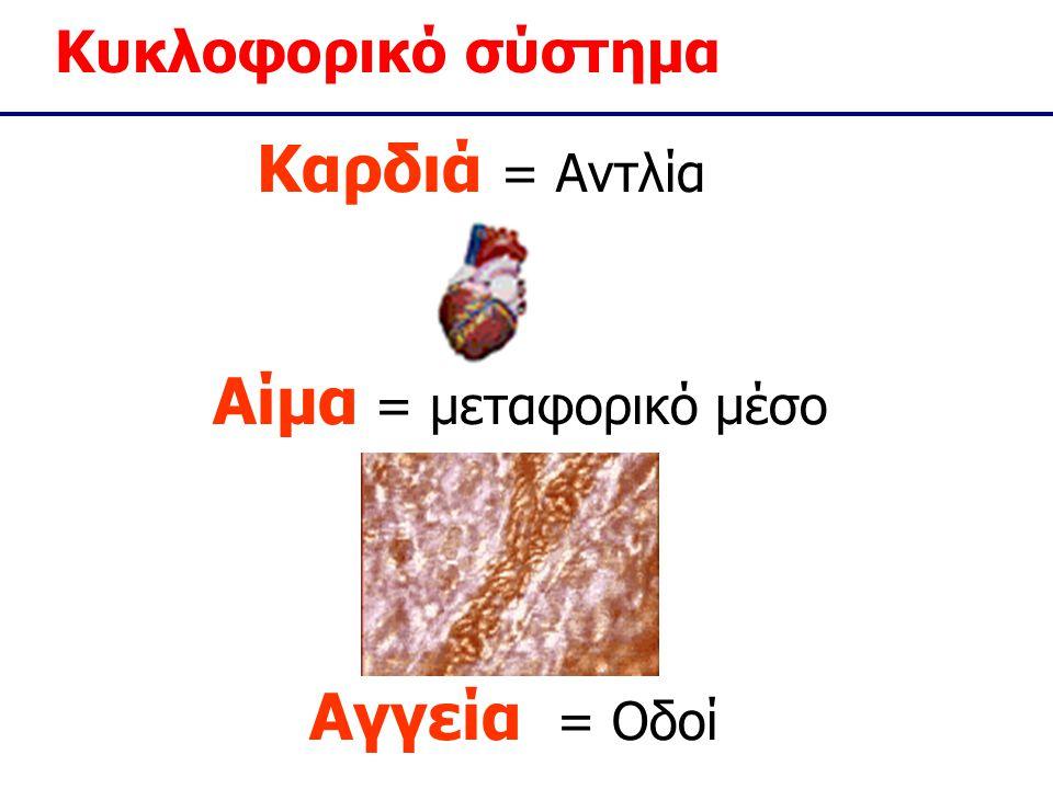Καρδιά = Αντλία Αίμα = μεταφορικό μέσο Αγγεία = Οδοί