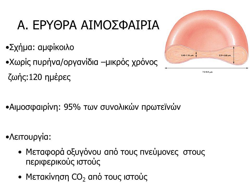 Α. ΕΡΥΘΡΑ ΑΙΜΟΣΦΑΙΡΙΑ Σχήμα: αμφίκοιλο