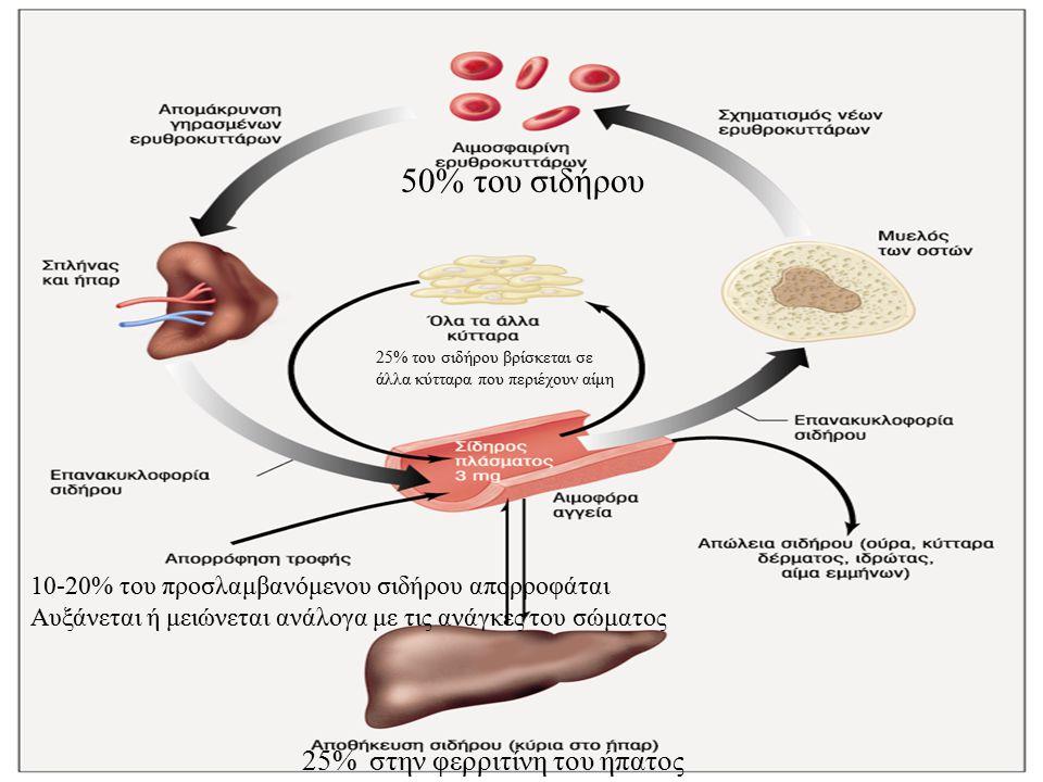 50% του σιδήρου 25% στην φερριτίνη του ήπατος