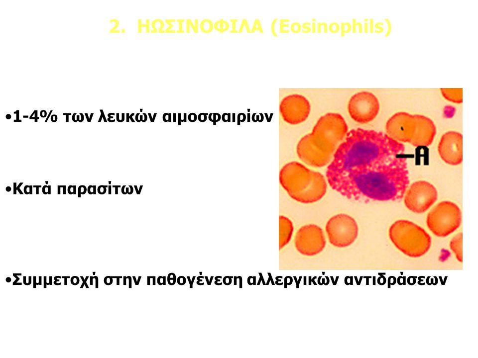 2. ΗΩΣΙΝΟΦΙΛΑ (Eosinophils)