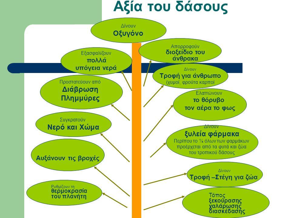 Αξία του δάσους Οξυγόνο Διάβρωση Πλημμύρες Νερό και Χώμα