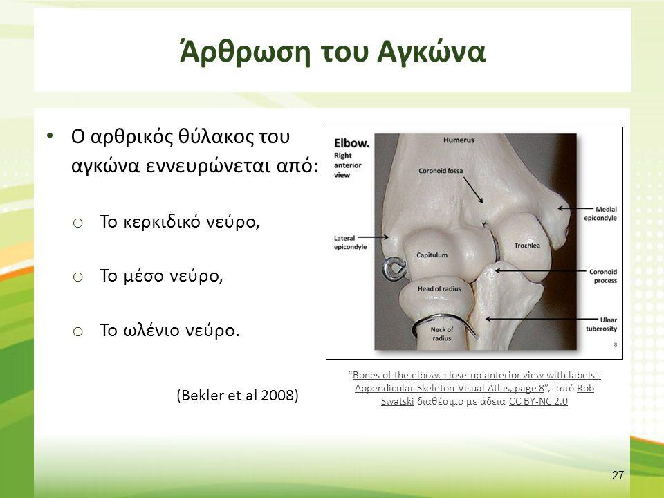 Άνω και κάτω κερκιδωλενική Άρθρωση