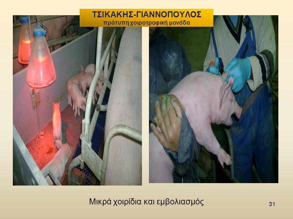Μικρά χοιρίδια και εμβολιασμός