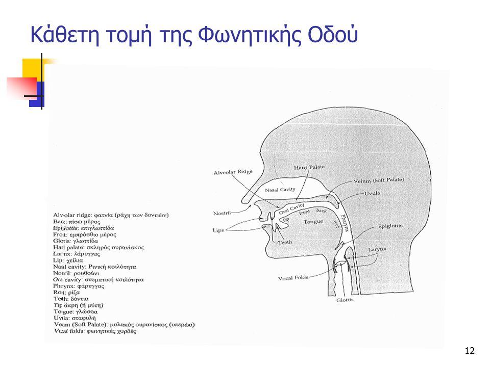 Κάθετη τομή της Φωνητικής Οδού