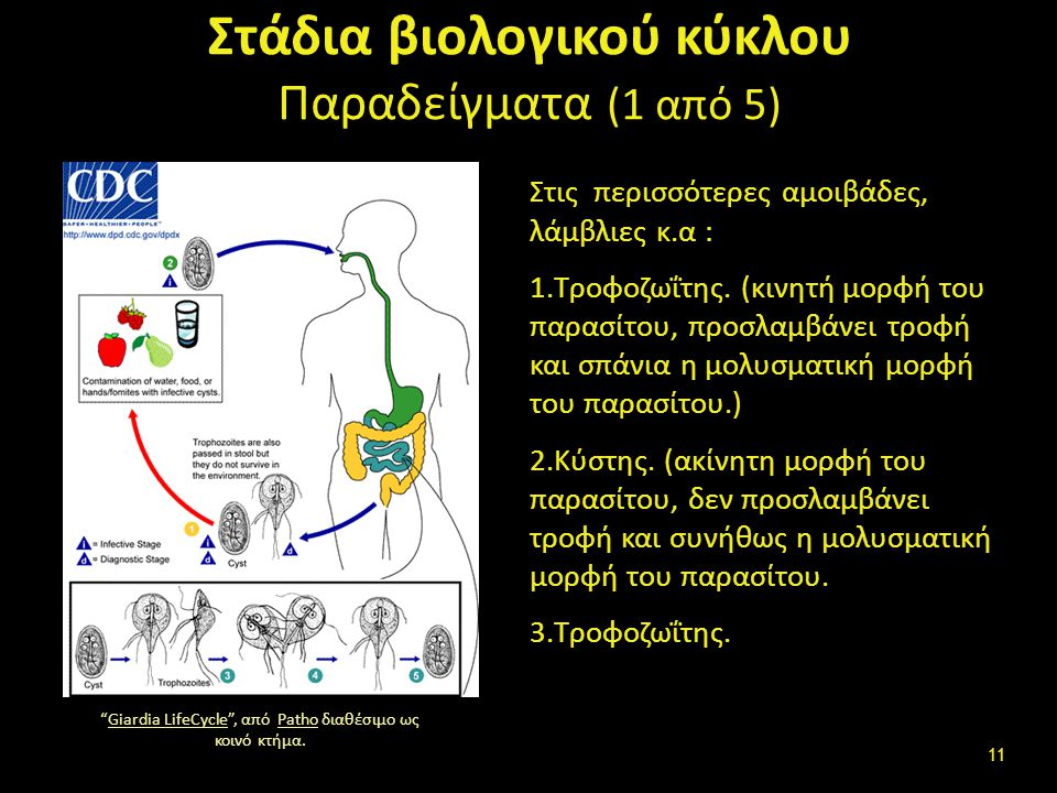 Στάδια βιολογικού κύκλου (2 από 5)