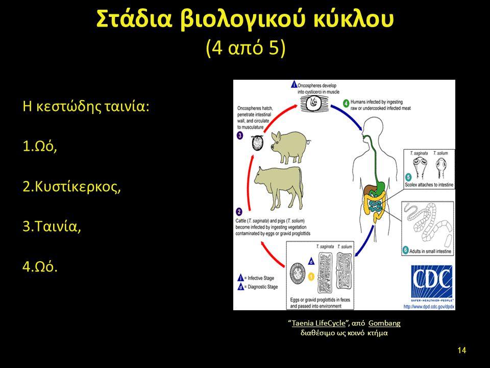 Στάδια βιολογικού κύκλου (5 από 5)