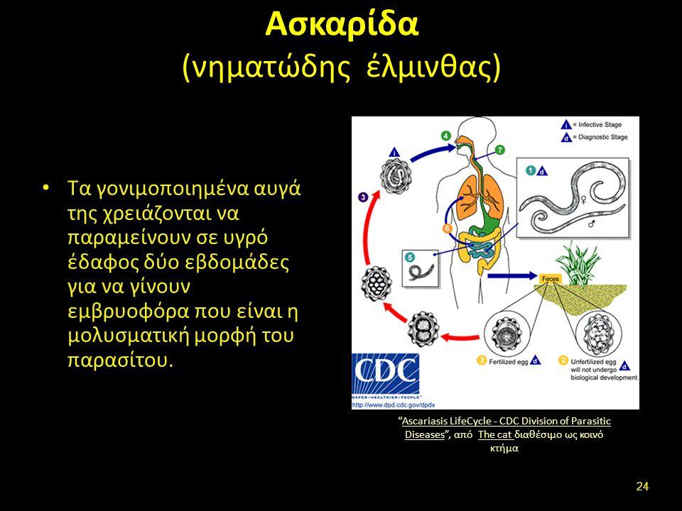 Έμμεσος βιολογικός κύκλος (indirect life cycle, heteroxenous)