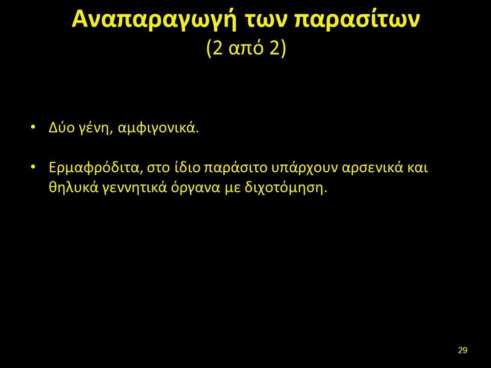 Αναπαραγωγή των πρωτόζωων (1 από 2)