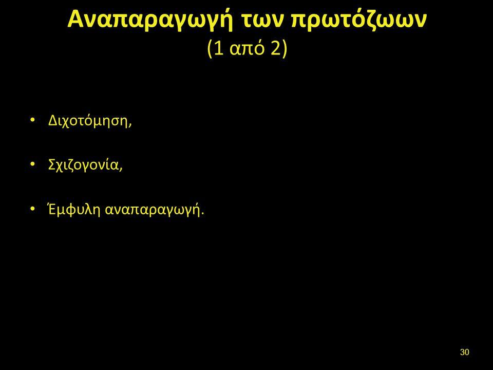 Αναπαραγωγή των πρωτόζωων (2 από 2)
