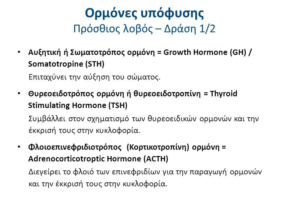 Ορμόνες υπόφυσης Πρόσθιος λοβός – Δράση 2/2