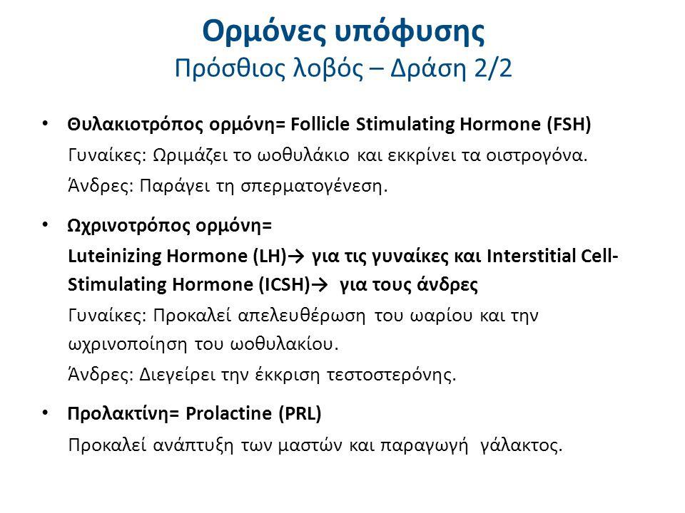 Ορμόνες υπόφυσης Οπίσθιος λοβός – Δράση