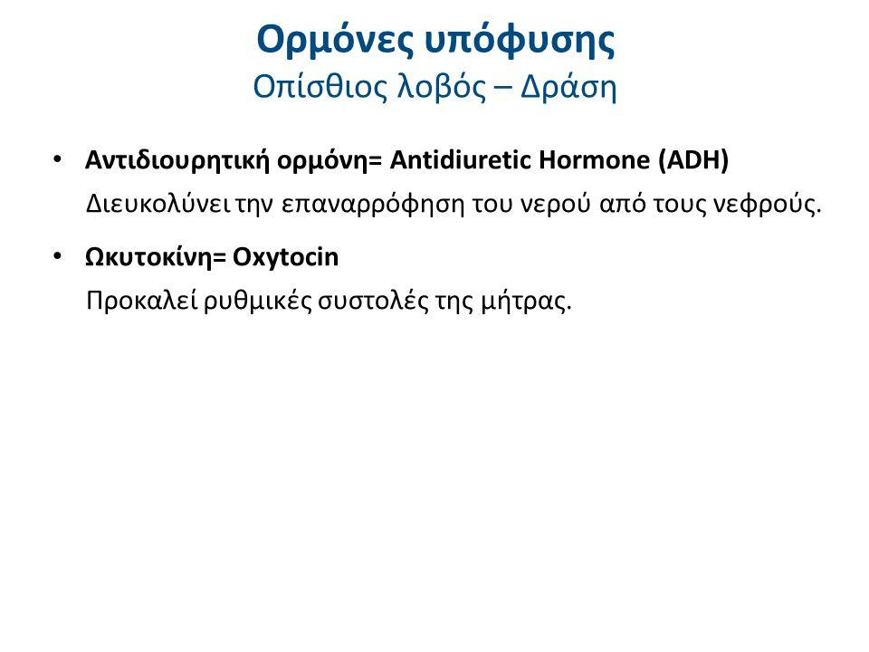 Άλλες σημαντικές ορμόνες