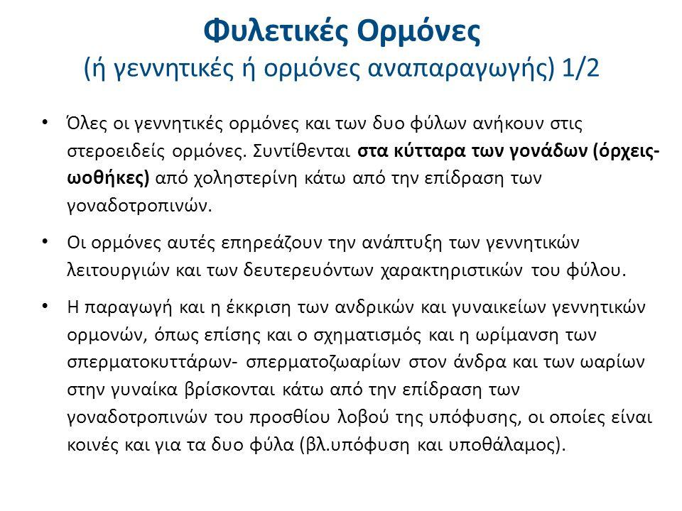 Φυλετικές Ορμόνες (ή γεννητικές ή ορμόνες αναπαραγωγής) 2/2