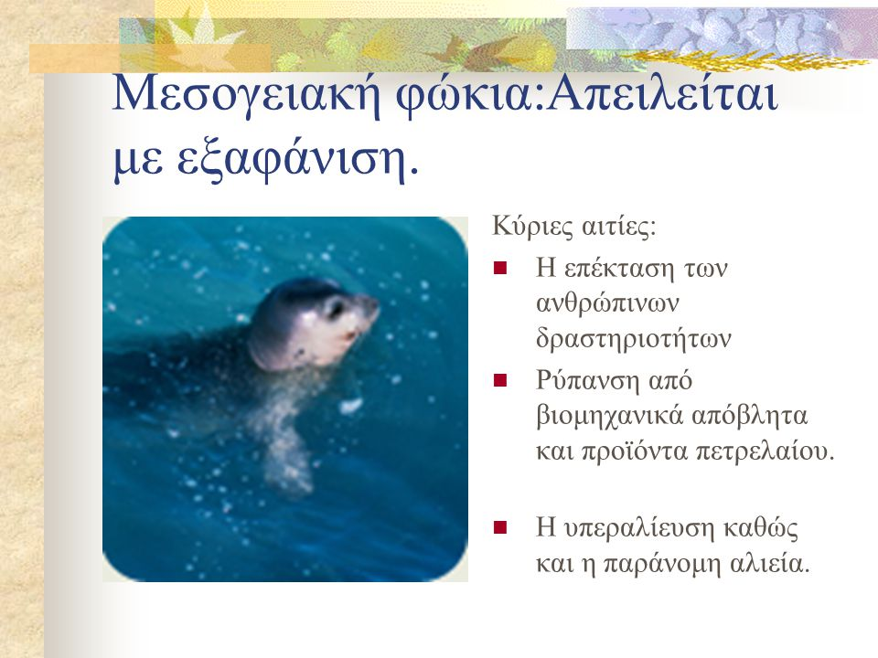 Μεσογειακή φώκια:Απειλείται με εξαφάνιση.