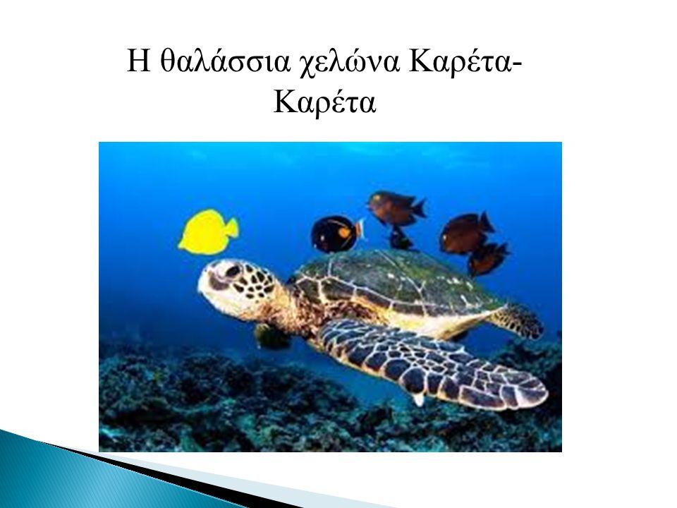 Η θαλάσσια χελώνα Καρέτα-Καρέτα