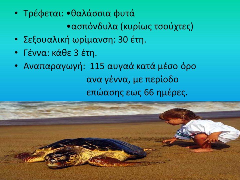 Τρέφεται: •θαλάσσια φυτά