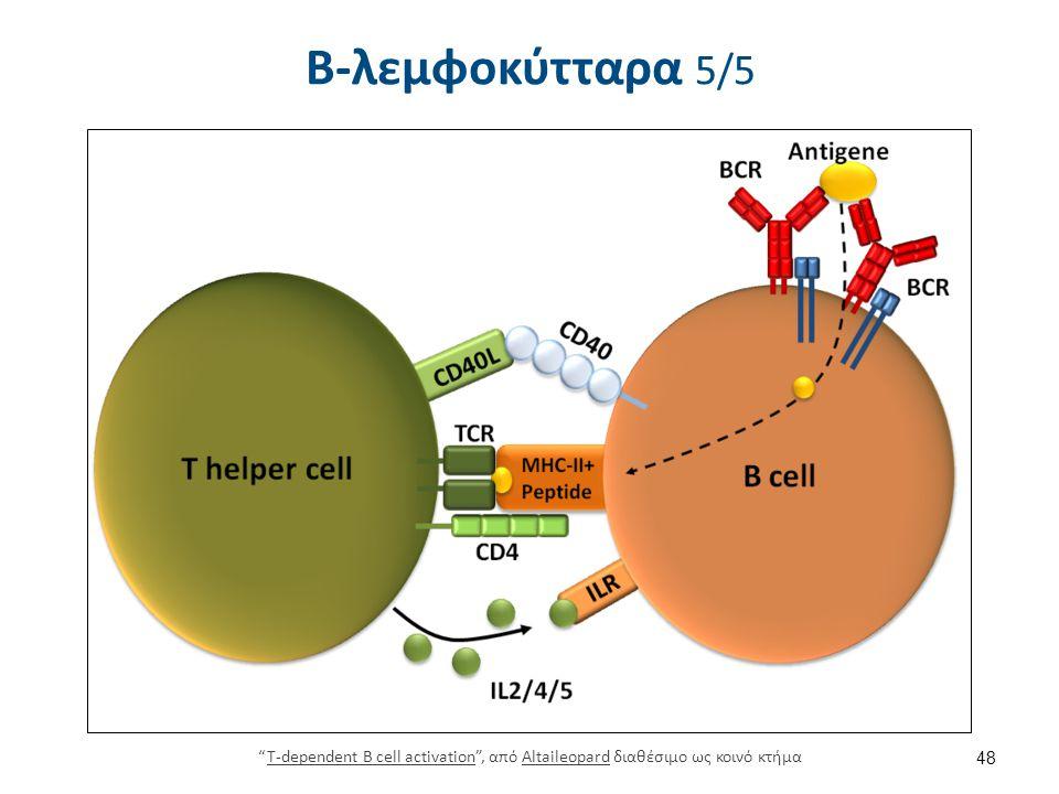 Κύτταρα φυσικοί φονείς - ΝΚ