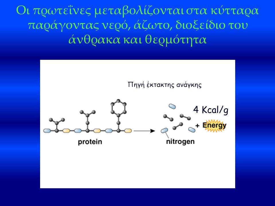 Οι πρωτεΐνες μεταβολίζονται στα κύτταρα παράγοντας νερό, άζωτο, διοξείδιο του άνθρακα και θερμότητα