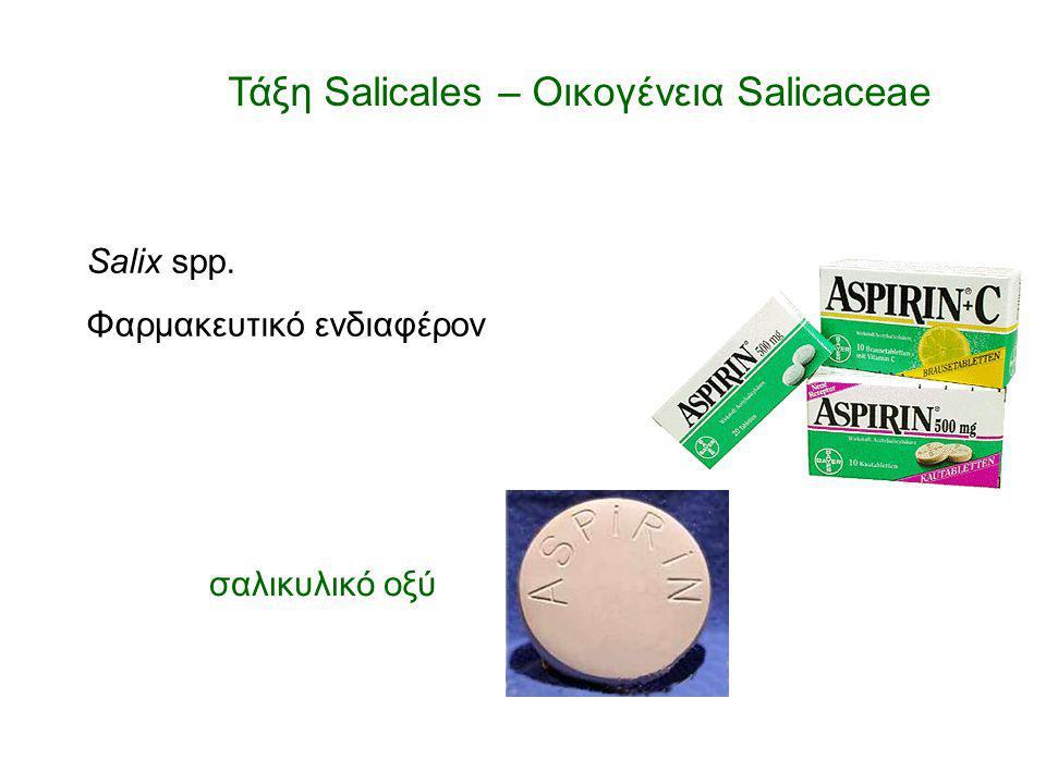 Τάξη Salicales – Οικογένεια Salicaceae
