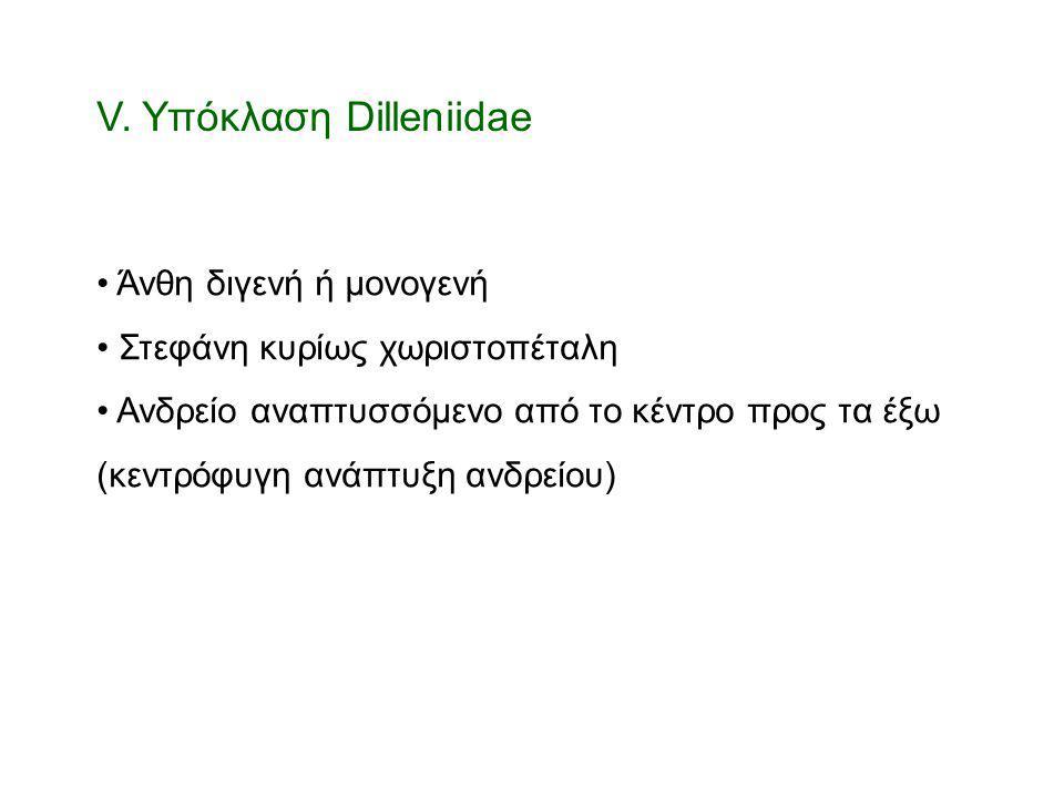 V. Υπόκλαση Dilleniidae