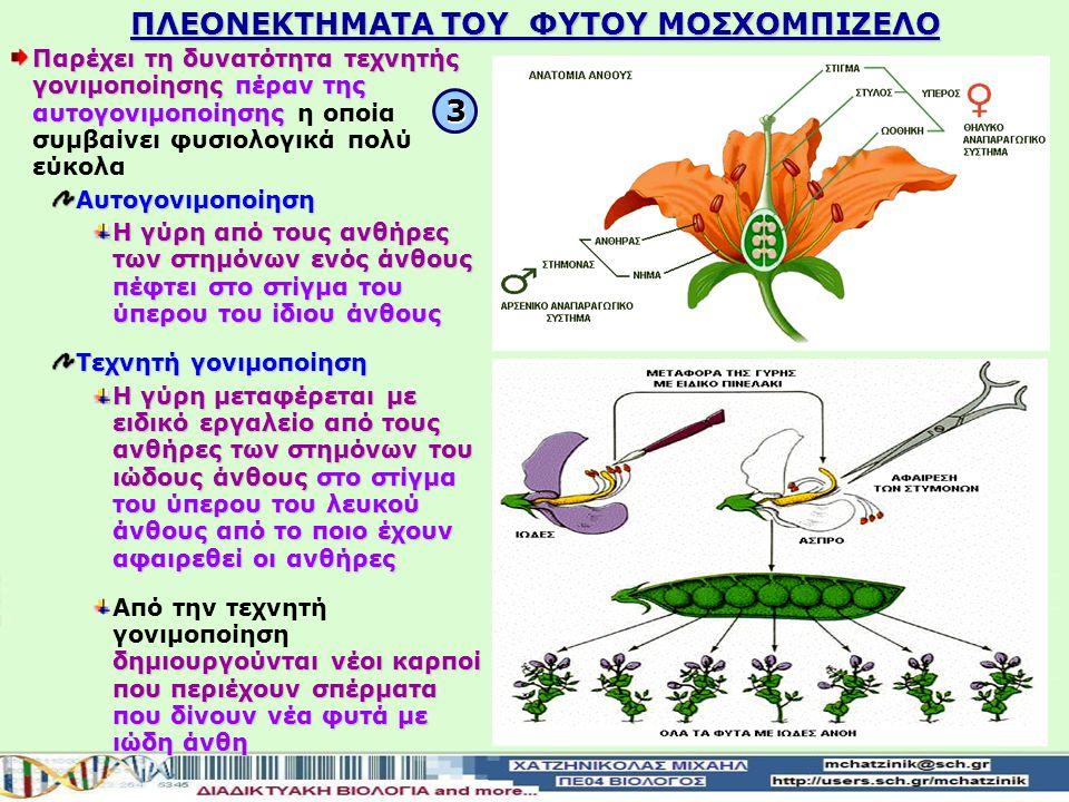 ΠΛΕΟΝΕΚΤΗΜΑΤΑ ΤΟΥ ΦΥΤΟΥ ΜΟΣΧΟΜΠΙΖΕΛΟ