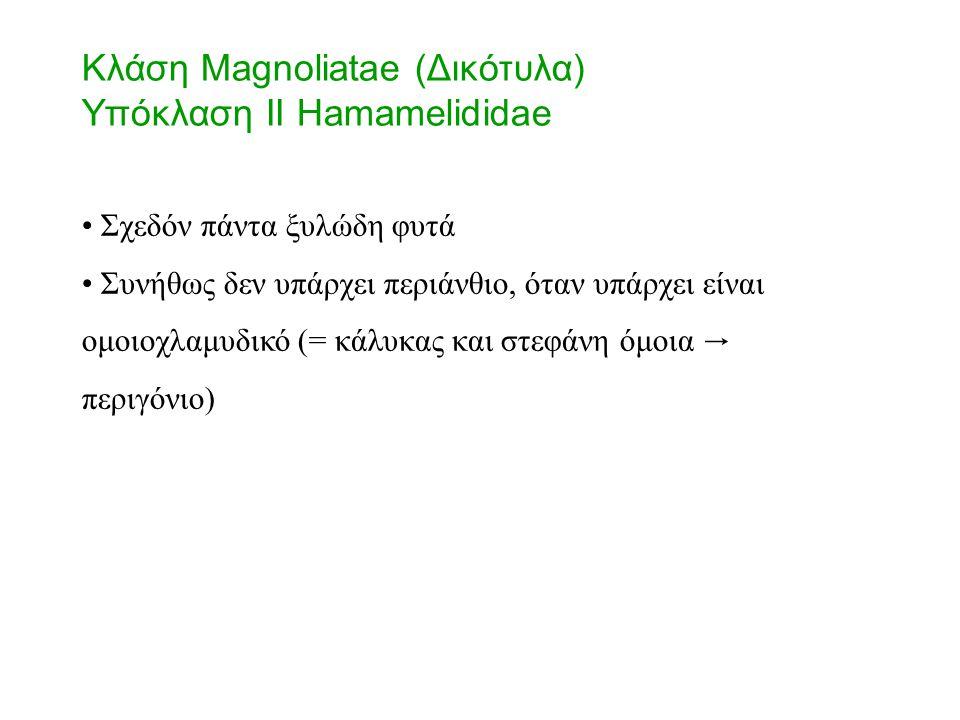 Κλάση Magnoliatae (Δικότυλα) Υπόκλαση II Hamamelididae