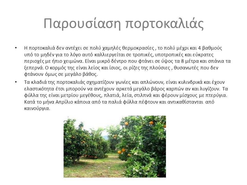 Παρουσίαση πορτοκαλιάς