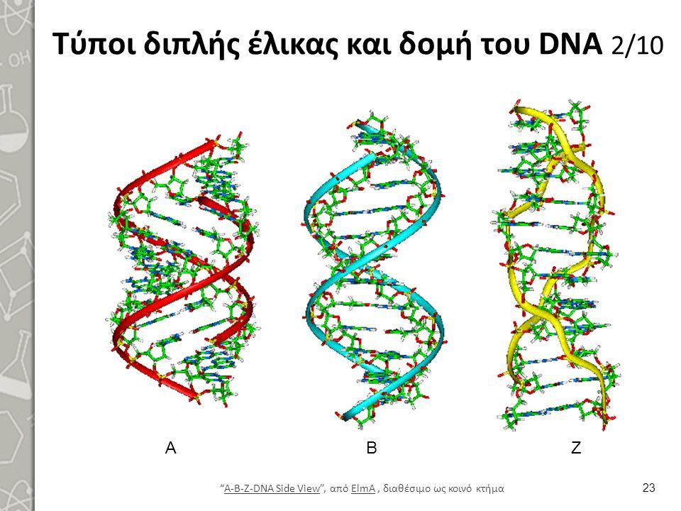 Τύποι διπλής έλικας και δομή του DNA 3/10