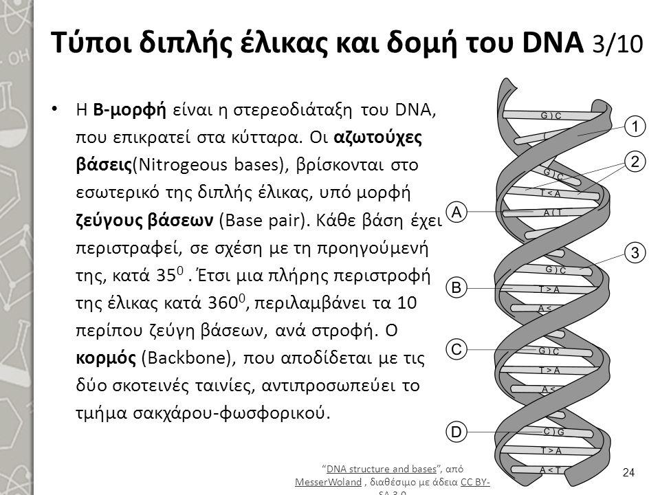 Τύποι διπλής έλικας και δομή του DNA 4/10