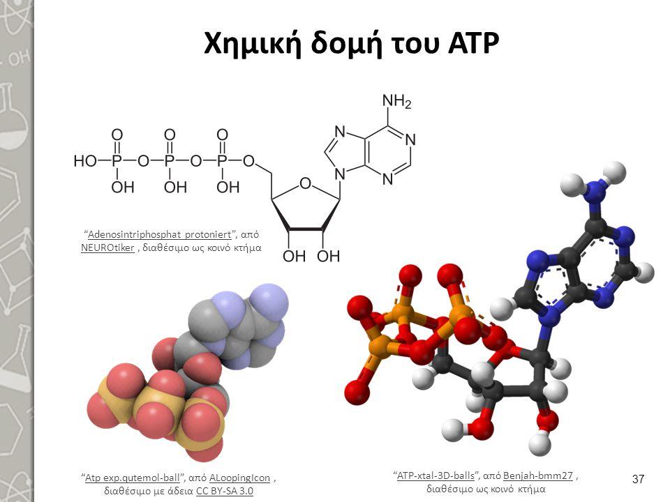 Μεταβολισμός νουκλεϊνικών οξέων (Ν.Ο.)