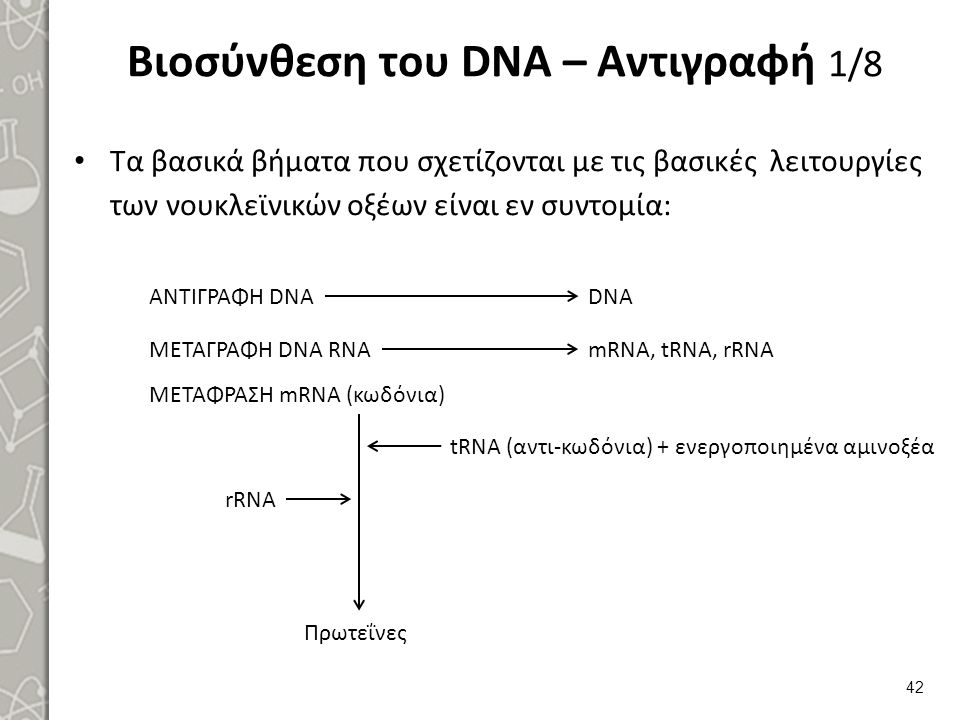 Βιοσύνθεση του DNA – Αντιγραφή 2/8