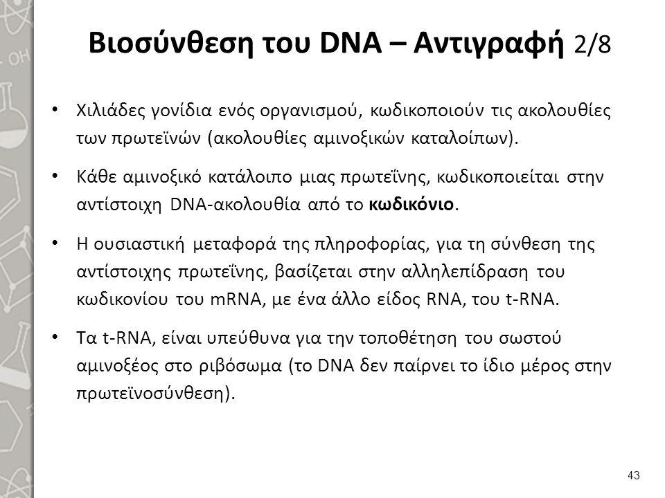 Βιοσύνθεση του DNA – Αντιγραφή 3/8