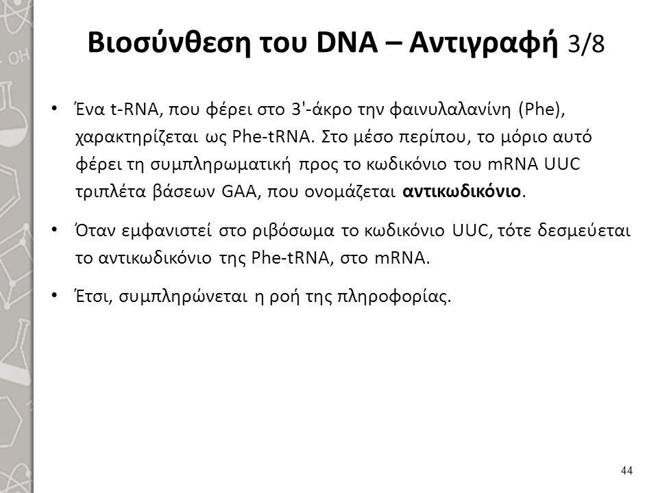 Βιοσύνθεση του DNA – Αντιγραφή 4/8
