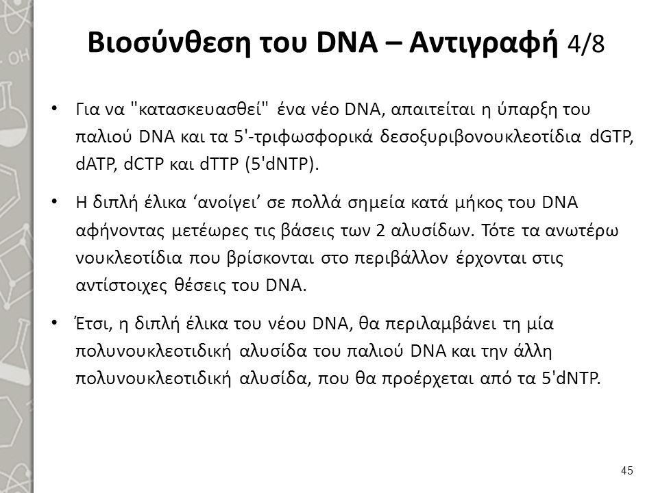Βιοσύνθεση του DNA – Αντιγραφή 5/8