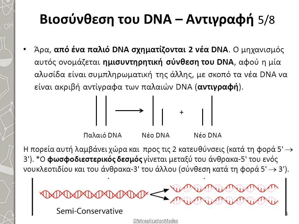 Βιοσύνθεση του DNA – Αντιγραφή 6/8