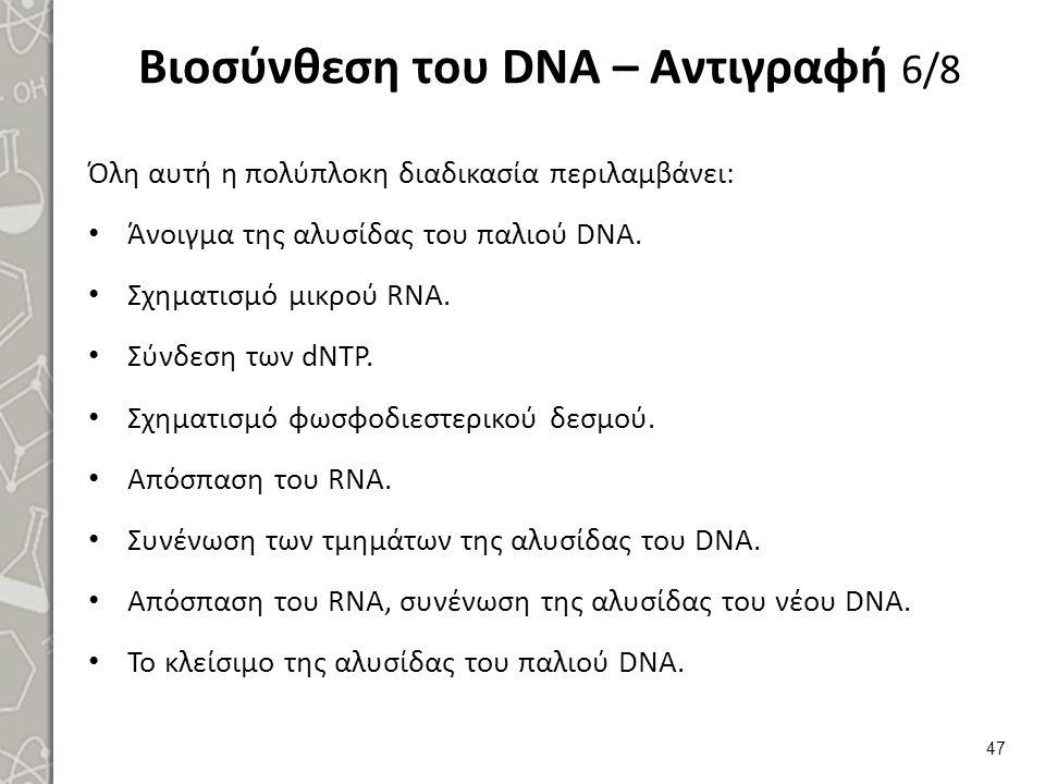 Βιοσύνθεση του DNA – Αντιγραφή 7/8