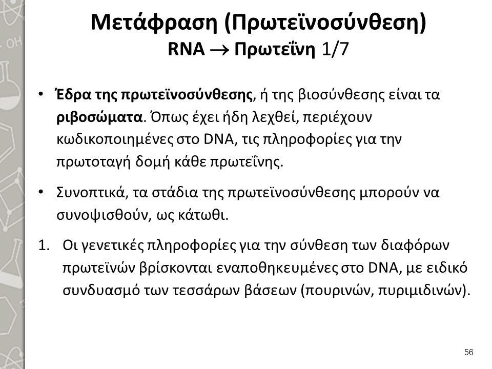 Μετάφραση (Πρωτεϊνοσύνθεση) RNA  Πρωτεΐνη 2/7