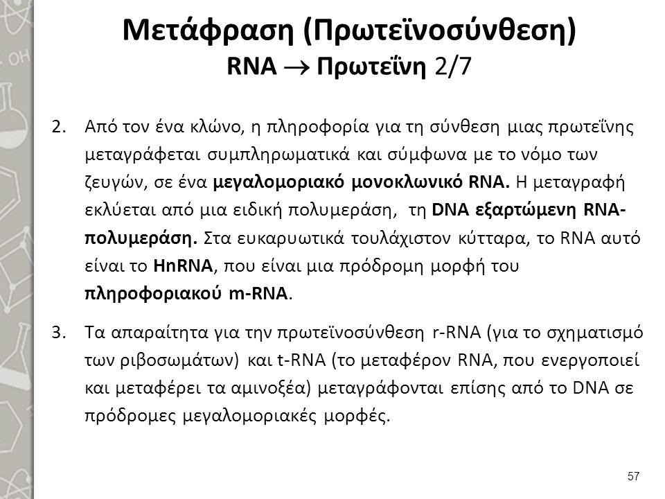 Μετάφραση (Πρωτεϊνοσύνθεση) RNA  Πρωτεΐνη 3/7