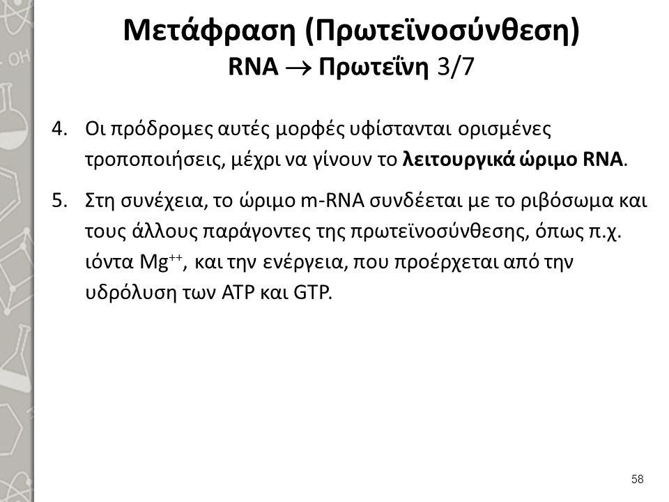 Μετάφραση (Πρωτεϊνοσύνθεση) RNA  Πρωτεΐνη 4/7