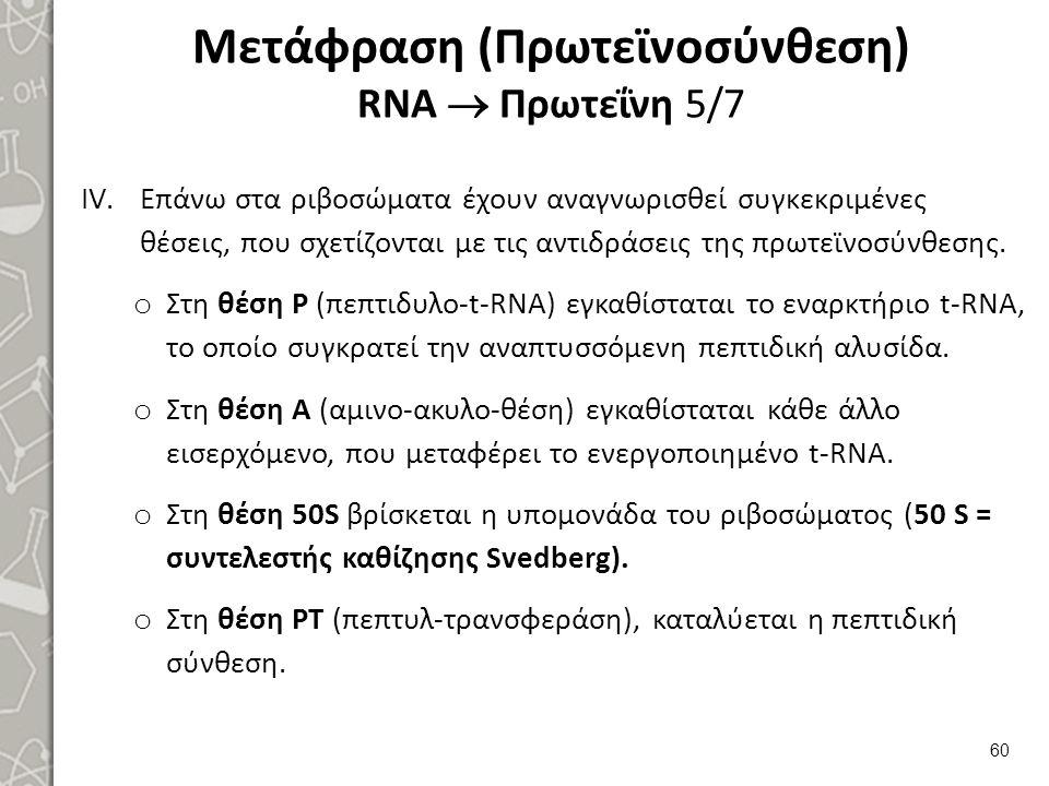 Μετάφραση (Πρωτεϊνοσύνθεση) RNA  Πρωτεΐνη 6/7