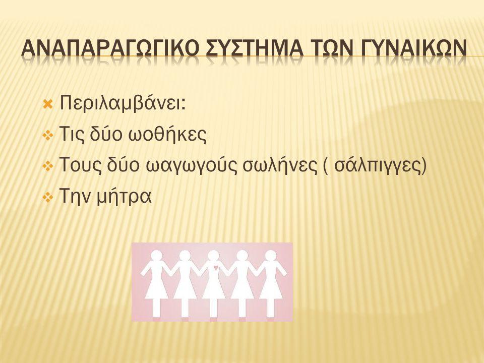 ΑναπαραγωγικΟ σΥστημα των γυναιΚΩν