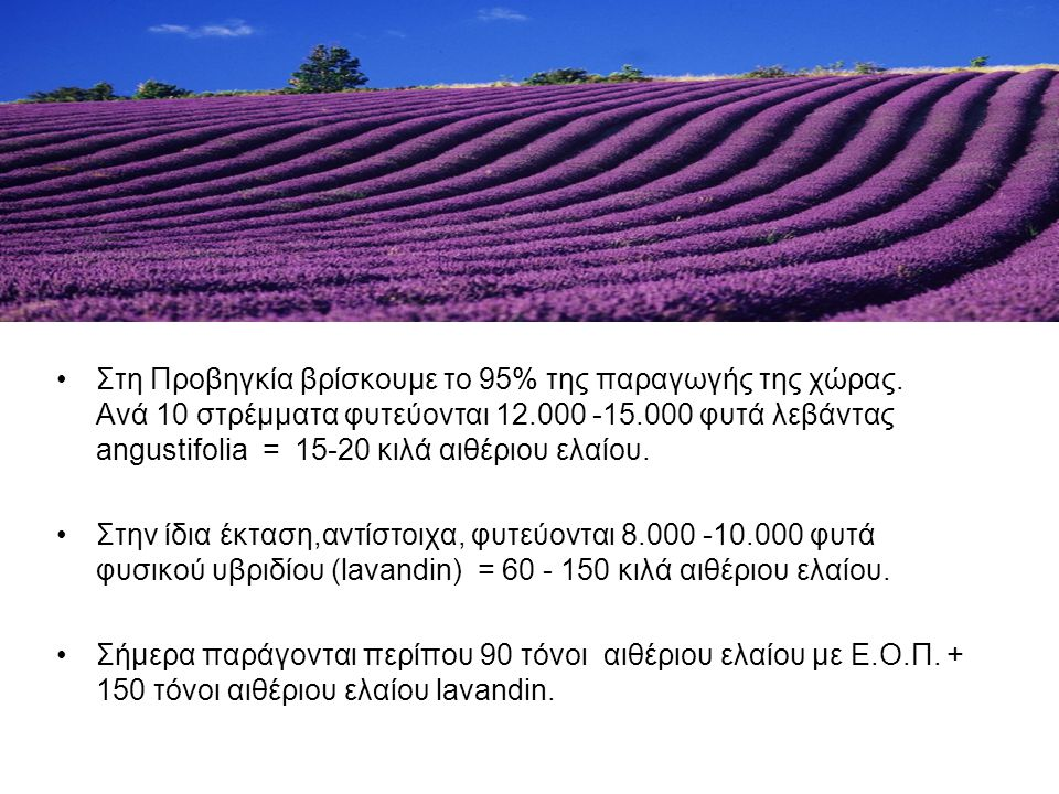 Στη Προβηγκία βρίσκουμε το 95% της παραγωγής της χώρας