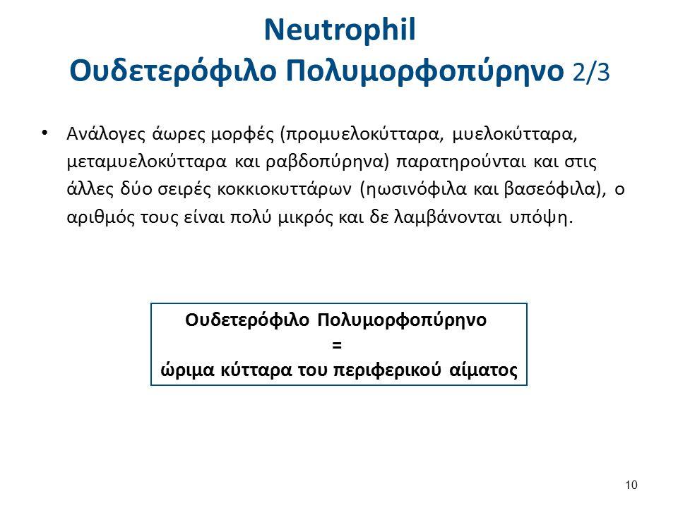 Neutrophil Ουδετερόφιλο Πολυμορφοπύρηνο 3/3