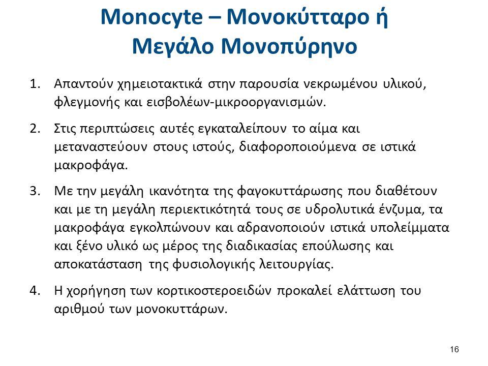 Lymphoblast - Λεμφοβλάστη