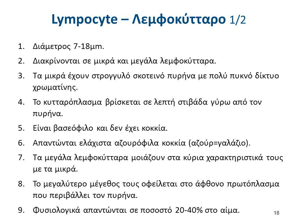 Lympocyte – Λεμφοκύτταρο 2/2