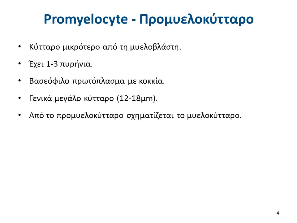 Myelocyte - Μυελοκύτταρο