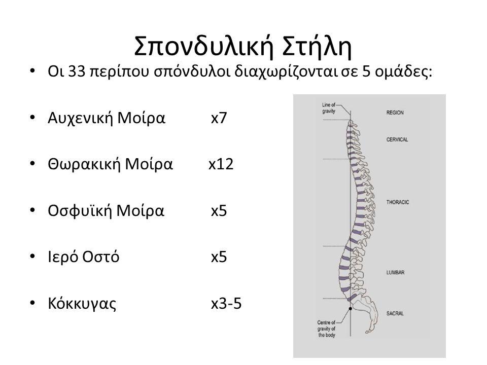 Σπονδυλική Στήλη Οι 33 περίπου σπόνδυλοι διαχωρίζονται σε 5 ομάδες: