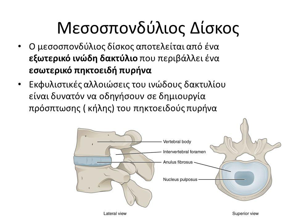 Μεσοσπονδύλιος Δίσκος