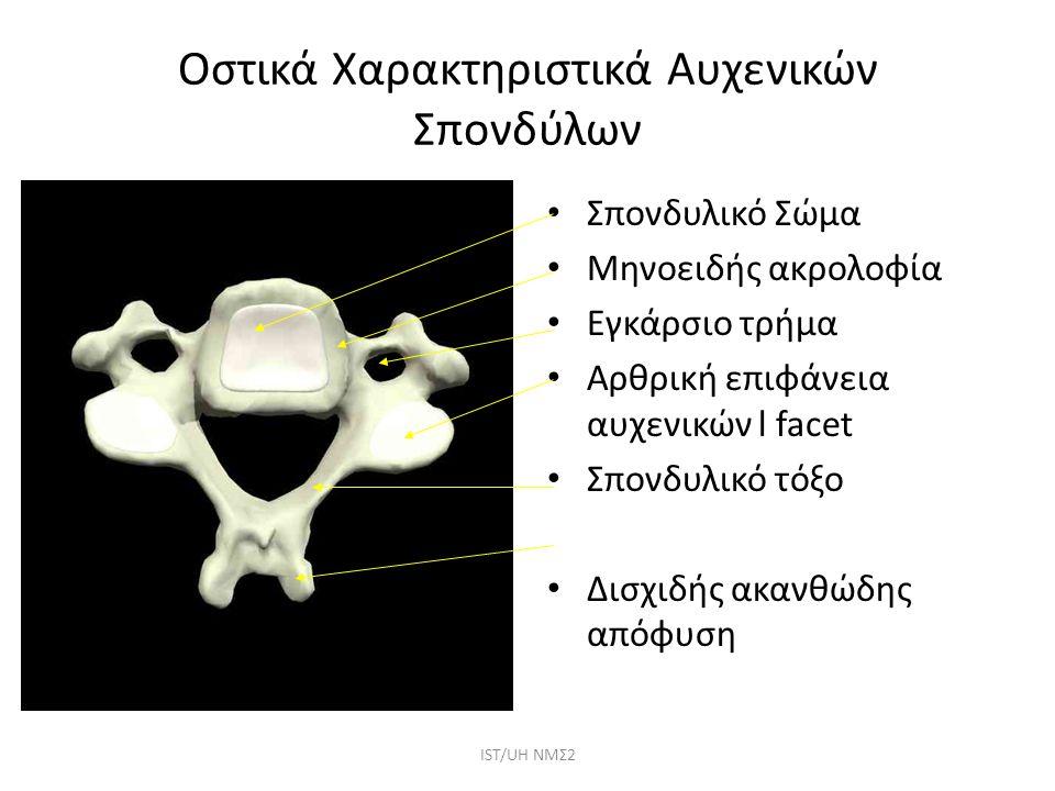 Οστικά Χαρακτηριστικά Αυχενικών Σπονδύλων